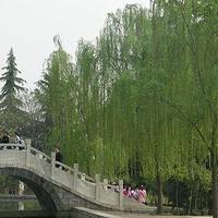 龙凤山公园