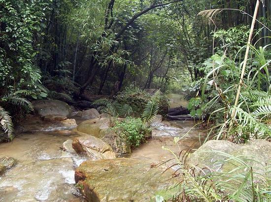 王子山森林公园门票_王子山生态森林公园分享展示