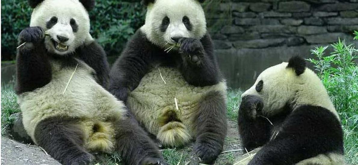 感受大自然其乐无穷 地址: 重庆市九龙坡杨家坪西郊路35号动物园轻轨