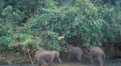 地处云南南端的西双版纳热带雨林是当今我国高纬度,高海拔地带保存最