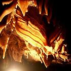 鲢鱼化石博物馆