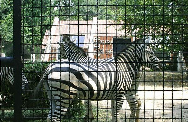武汉动物园电子导览服务(短信发送,不含门票)