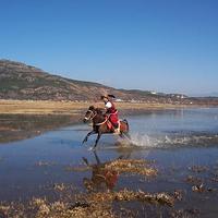 拉市海海北恩宗三队骑马场
