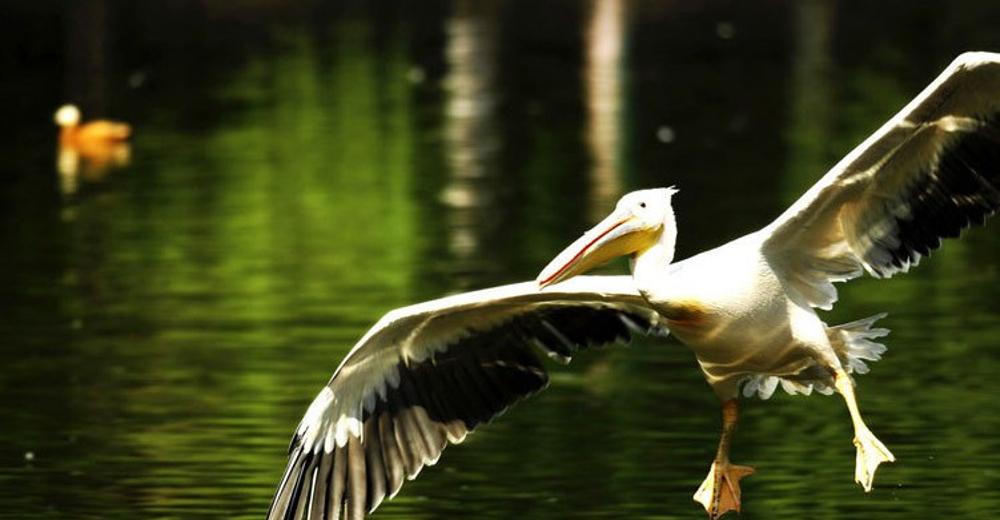 紫竹院公园 北京动物园 皇家御河游船紫御湾码头 京城水系皇家御河游