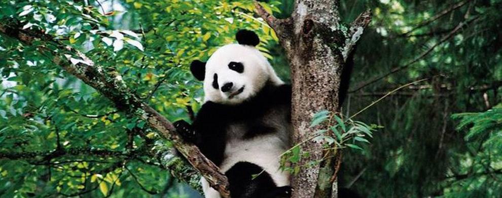 手绘熊猫眼睛怎么画