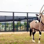 运河湾森林动物园