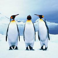 蓬莱海洋极地世界