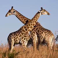 八達嶺野生動物園
