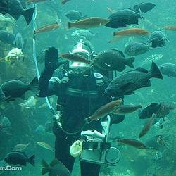 蒙特雷湾水族馆