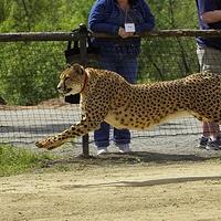 圣地亚哥野生动物园