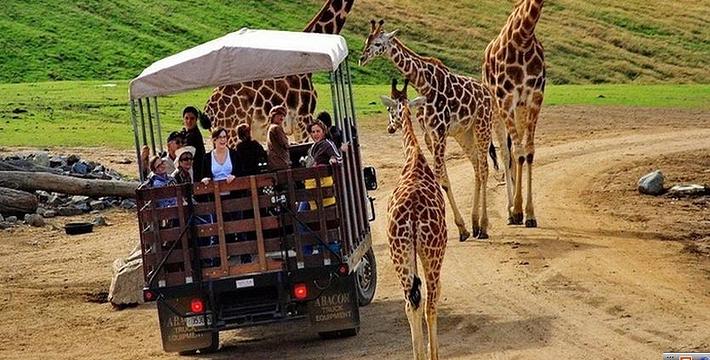 圣地亚哥野生动物园门票
