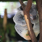 龙柏树熊野生动物园