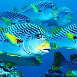 金鹰海洋世界