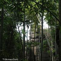 西部竹石林