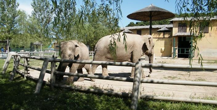 北方森林动物园门票_贵阳森林野生动物园门票,贵阳森林野生动物园门票预订,贵阳森林