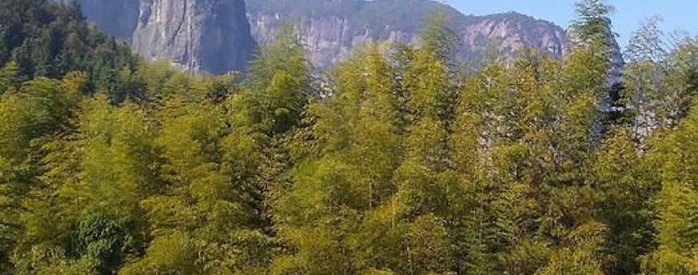 淡竹原始森林
