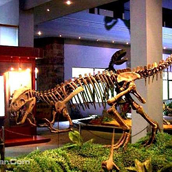 自贡恐龙博物馆