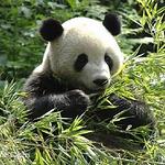碧峰峡动物园区