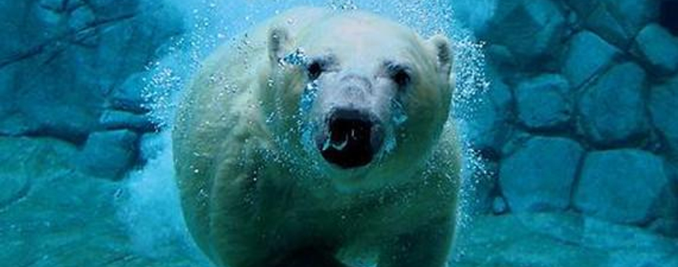 憨态可掬的北极熊