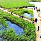 黄河口湿地生态园