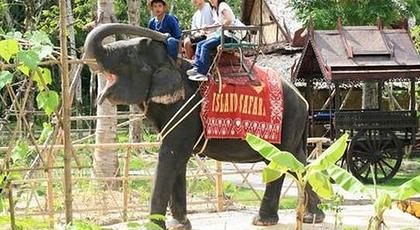 无论是你大朋友还是有小朋友一定会爱上这里可爱非常的小象,还可走走