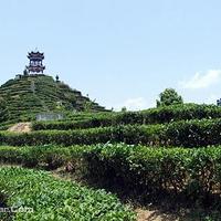 茶山金字塔