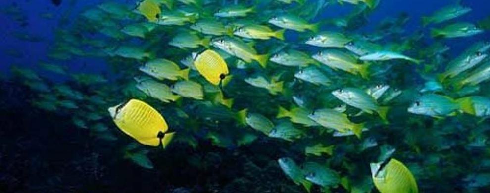海洋生物零距离