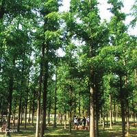 泉山森林公园