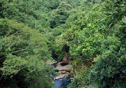 深圳市天然园山风景区门票