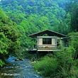 次生林度假村