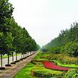 法桐生态公园