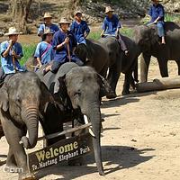 梅沙大象营