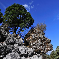 攀枝花绿石林