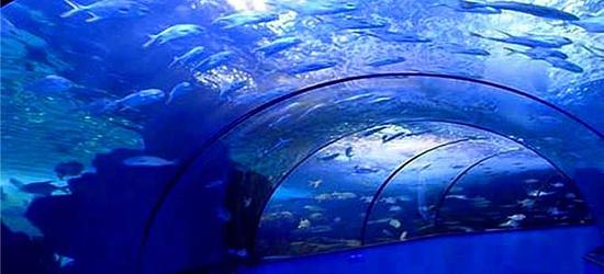 开封东京极地海洋馆攻略,开封东京门票海洋馆奇蛙v极地极地图片