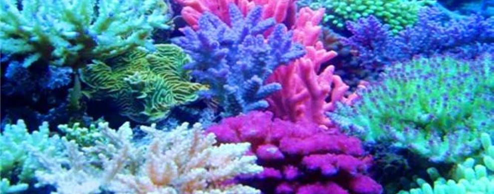 貌似植物实则动物的珊瑚千姿百态,各种色彩鲜艳的鱼儿在其间往来穿梭