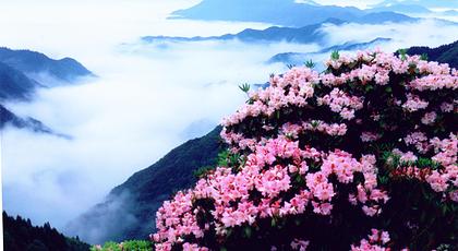 天台山华顶国家森林公园门票-去哪儿网门票预订图片图片