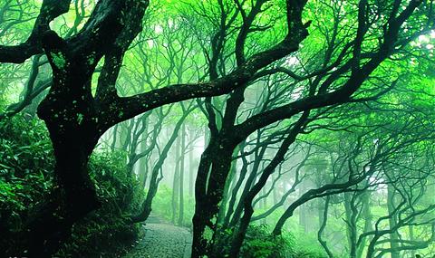 天台山华顶国家森林公园景点门票