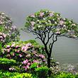 天台山华顶国家森林公园