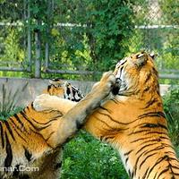南京野生动物园
