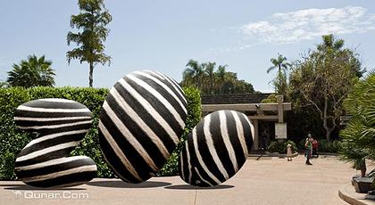 圣地亚哥动物园拥有世界上最先进的管理设施,诸如猎豹,麝香牛等动物