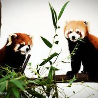 武汉九峰森林动物园