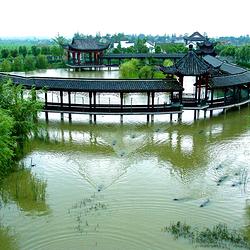中国扬子鳄村
