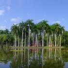 中科院西双版纳热带植物园