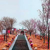 婆仙岭樱花园