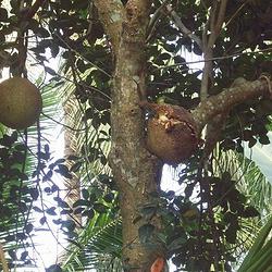 海南热带植物园.