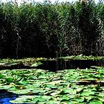巴音郭楞莲花湖