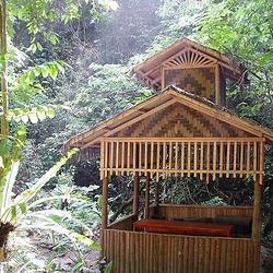 瑞丽市莫里热带雨林