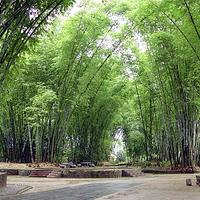 勐巴娜西大花园