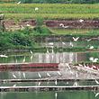 洪斗坡白鹭乐园