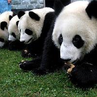 四川卧龙自然保护区